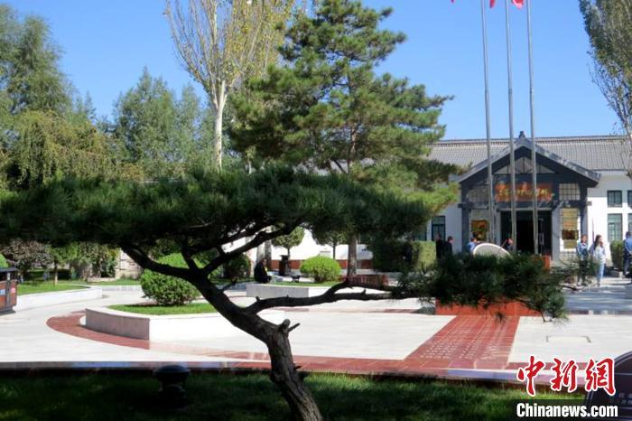 宁夏西吉将台堡三军会师纪念馆门前的针叶油松。 惠六七 摄